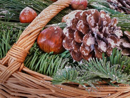 Winter decoration, with pine cones and red berries on dark green pine branches - with focus stacking