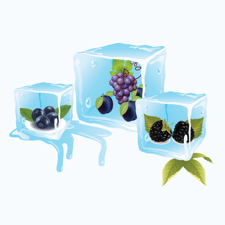 juicy and delicious grapes plum blueberry ice cubes in Vector