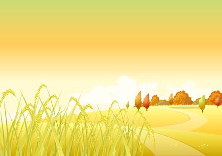 beardless: Autumn  Golden wheat on a background of yellow autumn trees and shrubs  Autumn time