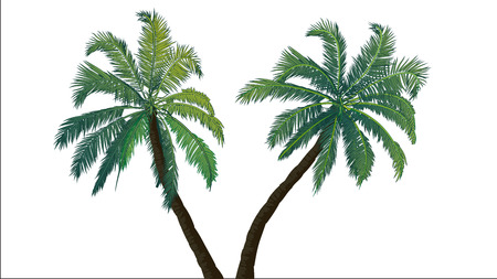 Two palm trees  Tropics  Places of subtropical and tropical climates  Resort in the tropical areas  Rest  Nature tropics  Vector