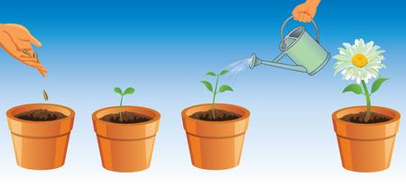 花の成長のプロセス。花を育てています。鍋の花。シーマン手の花を植えることのプロセスです。Pidlyvannya の花を持つ手に水をまきます。