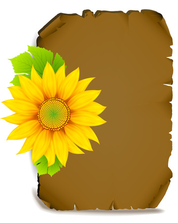 cartoons outline: Sunflower on parchment. Autumn ripe sunflower. Classifieds in autumn style. Illustration
