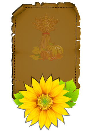 Sheet of parchment with sunflower Vector