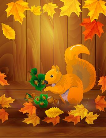 eurasian: Squirrel in the autumn Illustration