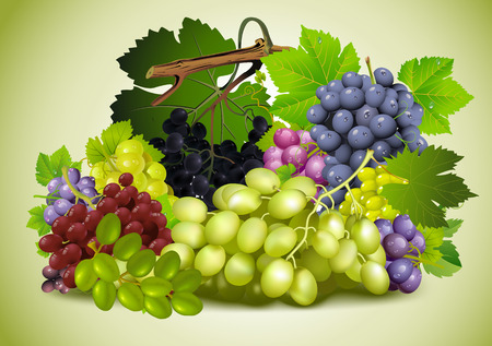 sliding colors: Natyurmord grapes. Varieties of grapes. Diversity grapes. Tasty grapes.