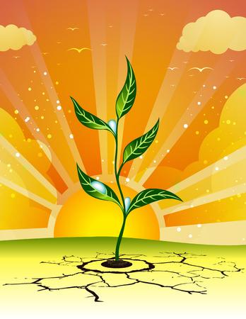 germination: Germination through solid ground.  Illustration