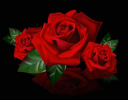 family mart: Un mazzo di rose rosse. Riflessione immagine mazzo di rose rosse. I germogli di rose.