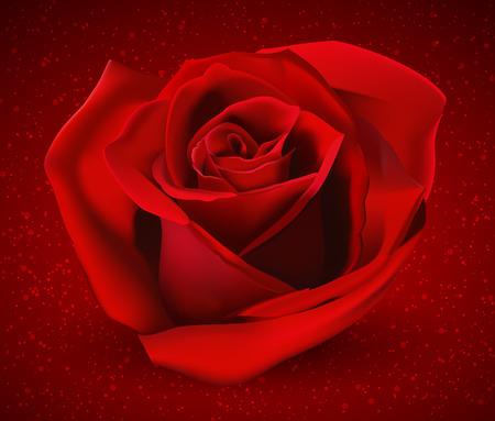 Rote Rose Knospe. Rote Rosen auf einem roten Hintergrund. Standard-Bild - 35586906