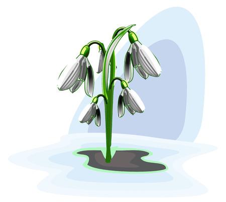 early spring: Bush snowdrops, vector art illustration early spring. Illustration