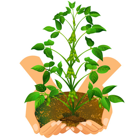 potting soil: Living plant in female Dolon, vector art illustration. Illustration