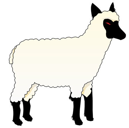 swindler: A wolf in sheeps clothing, vector art illustration.