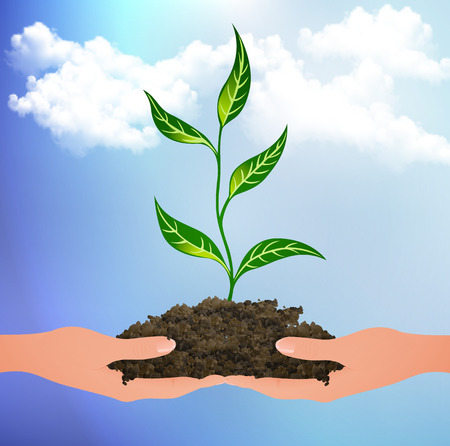 The plant sprouted from the clods on the palms vector art illustration. Illustration