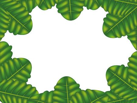 vehement: The frame of the plant ferns, vector art illustration.