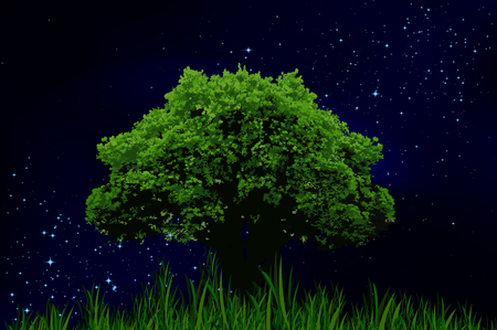 lone: The starry night sky and lonely tree, vector art illustration.