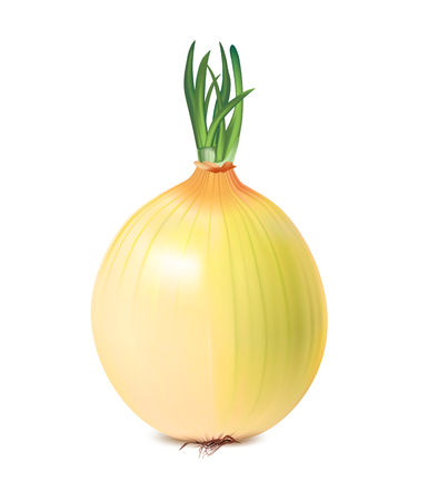 art product: Isolated vegetable Onion, vector art illustration product.