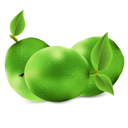 Isolated green walnut, vector art illustration.