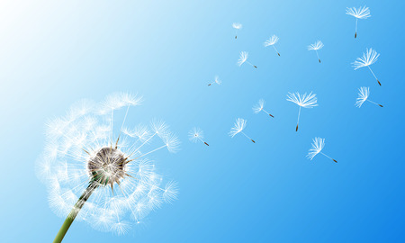 Dandelion on blue sky background, vector art illustration.