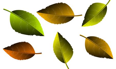 Autumn yellow leaves, vector art illustration. Illustration