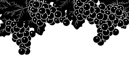 Black and white grapevines, vector art illustration.