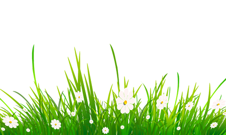 Chamomile and grass on a white background, vector art illustration.
