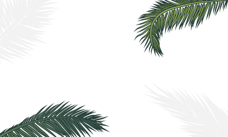 Palm branches on a white