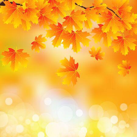 Branch with autumn leaves on bokeh Ilustração