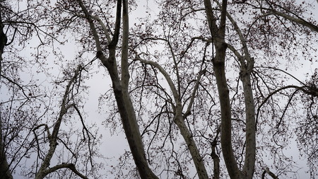 landscape view through the branches of trees Stock Photo
