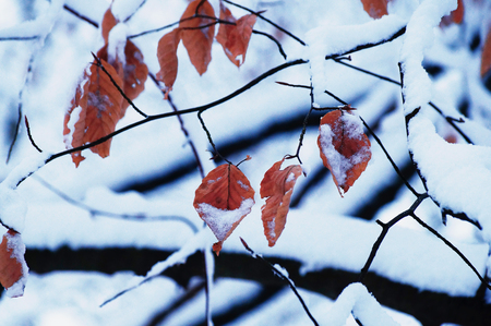 Winter, Schnee, Blatt Rot Ast ste Trist Landschaft Stock Photo