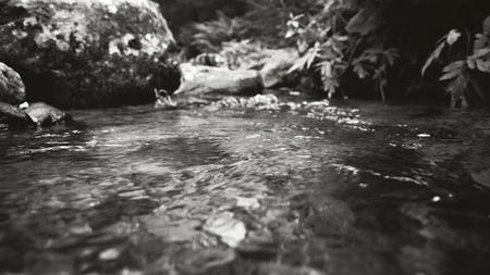Bach, Wald, Wasser Schwarz wei sterreich Sommer Standard-Bild
