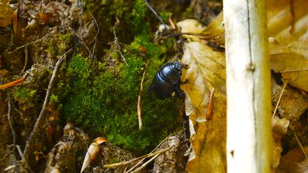 Tier, Holz, Baum Stamm Hintergrund Schwarz wei