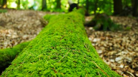 Baeume, Wiese, Blaetter, Moos Erde Boden Sonne Sommer Pilze