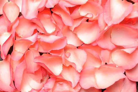Beautiful pink Rose petals, close up photo