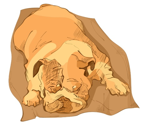 Sleeping bulldog Illustration