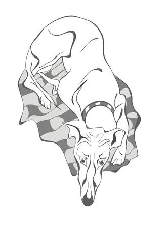 borzoi: sad dog lying on the mat Illustration