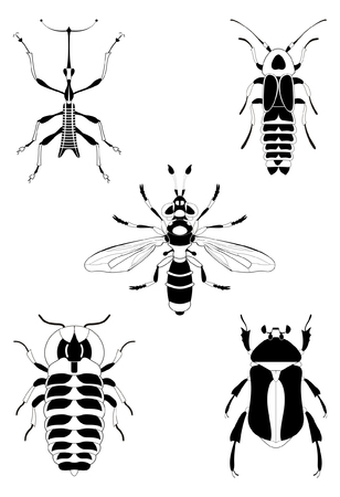 illustration collection: Decor insect illustration collection for design