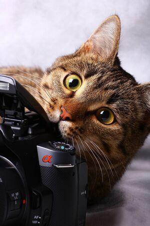 Cat biting the camera on gray background Фото со стока