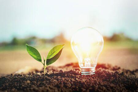 Lampes à économie d'énergie et plantation d'arbres sur le sol Concept d'économie d'énergie électrique
