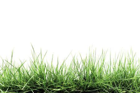 Gras op witte achtergrond wordt geïsoleerd die Stockfoto