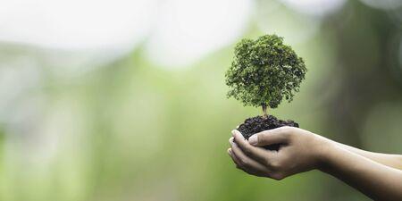 Baumpflanzung auf den Händen einer freiwilligen Familie für ein umweltfreundliches Kampagnenkonzept für die soziale Verantwortung des Unternehmens