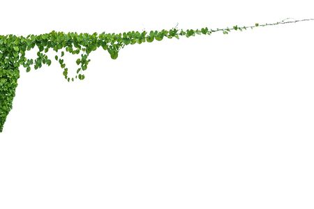 Vine on a pole on a white background