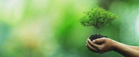 Tree planting on volunteer family's hands for eco friendly and corporate social responsibility campaign concept Standard-Bild