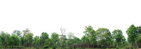 The forest is located separately on a white background.