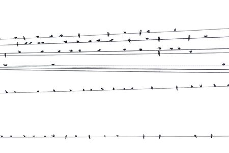Birds on a wire on a white background