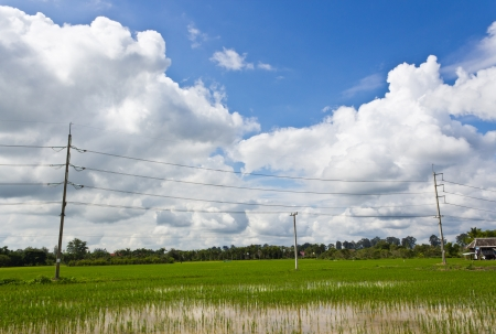 High Voltage Electricity Poles in the Rice Field. photo