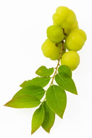 tahitian: Otaheite gooseberry, Malay gooseberry, Tahitian gooseberry, country gooseberry, star gooseberry, starberry, grosella , karamay fruit on white background Stock Photo