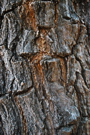 Neem tree bark