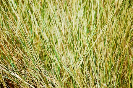 Green and dry grass Stock Photo - 7198359