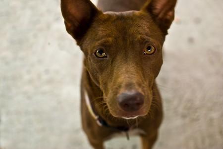 Begging Dog photo