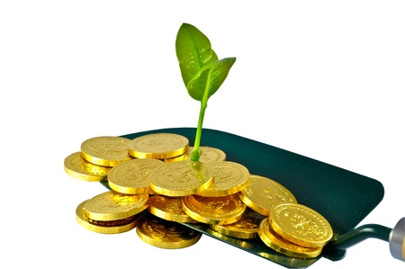 Plant on the gold coins Stock Photo