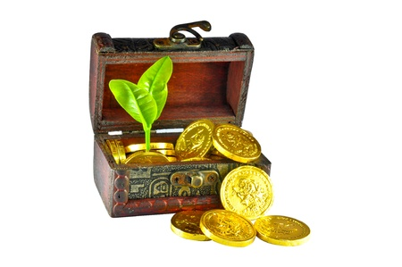 Plant in a box of gold coins Stock Photo - 10119916